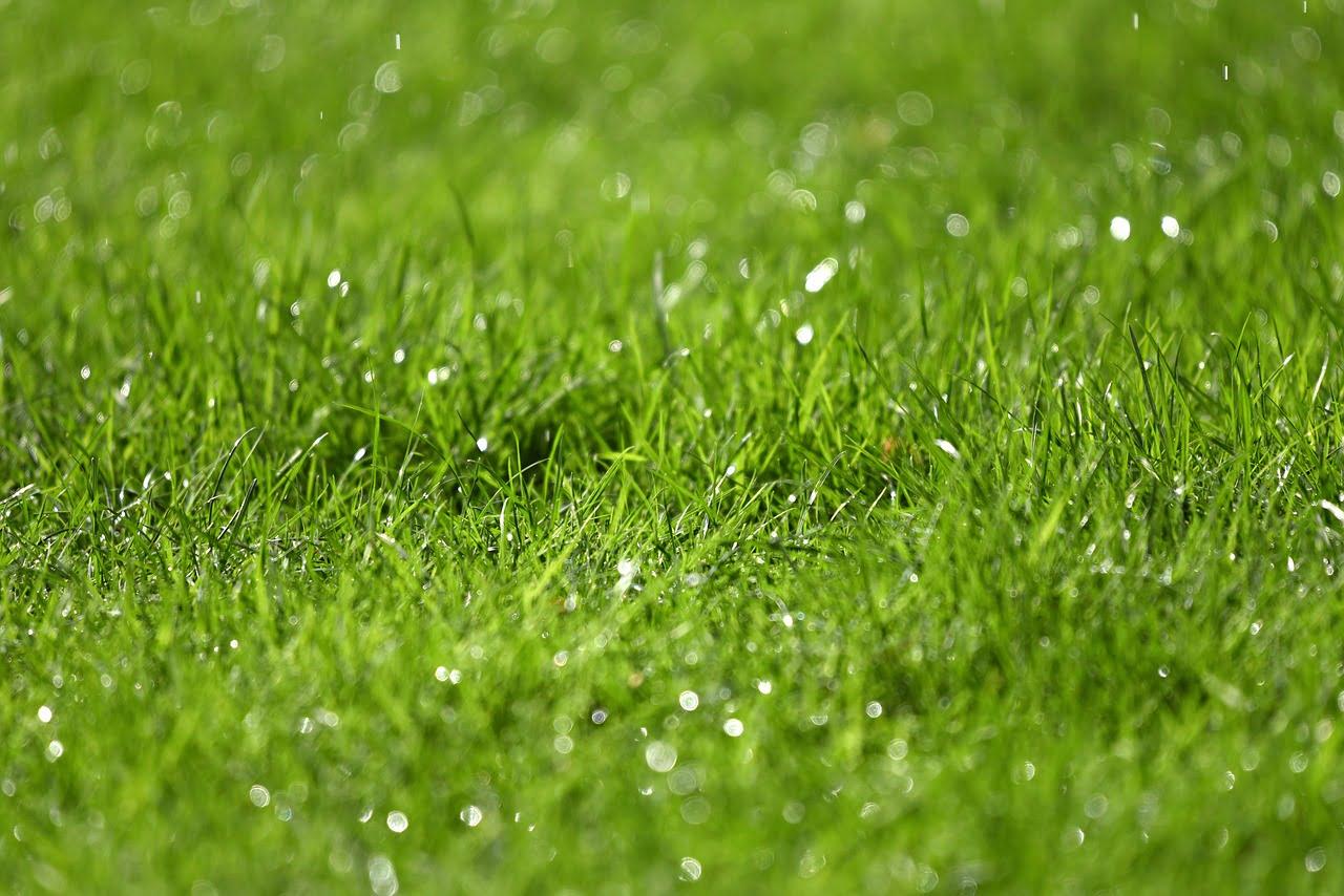 Dette skal du huske, når du gerne vil rense fliserne udenfor dit hjem